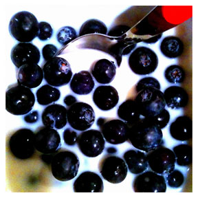 Organic Blue Berries iPhone Organic Show Artist Dean Allan McCready